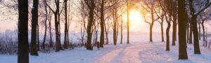 wintertreesfull